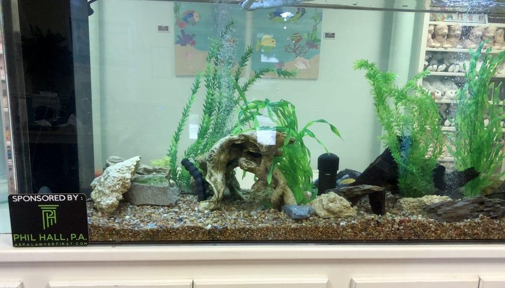 Image of aquarium in Santa Rosa Kids House